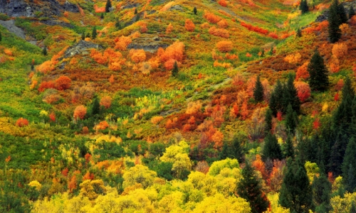 Provo Canyon Utah Fall Colors